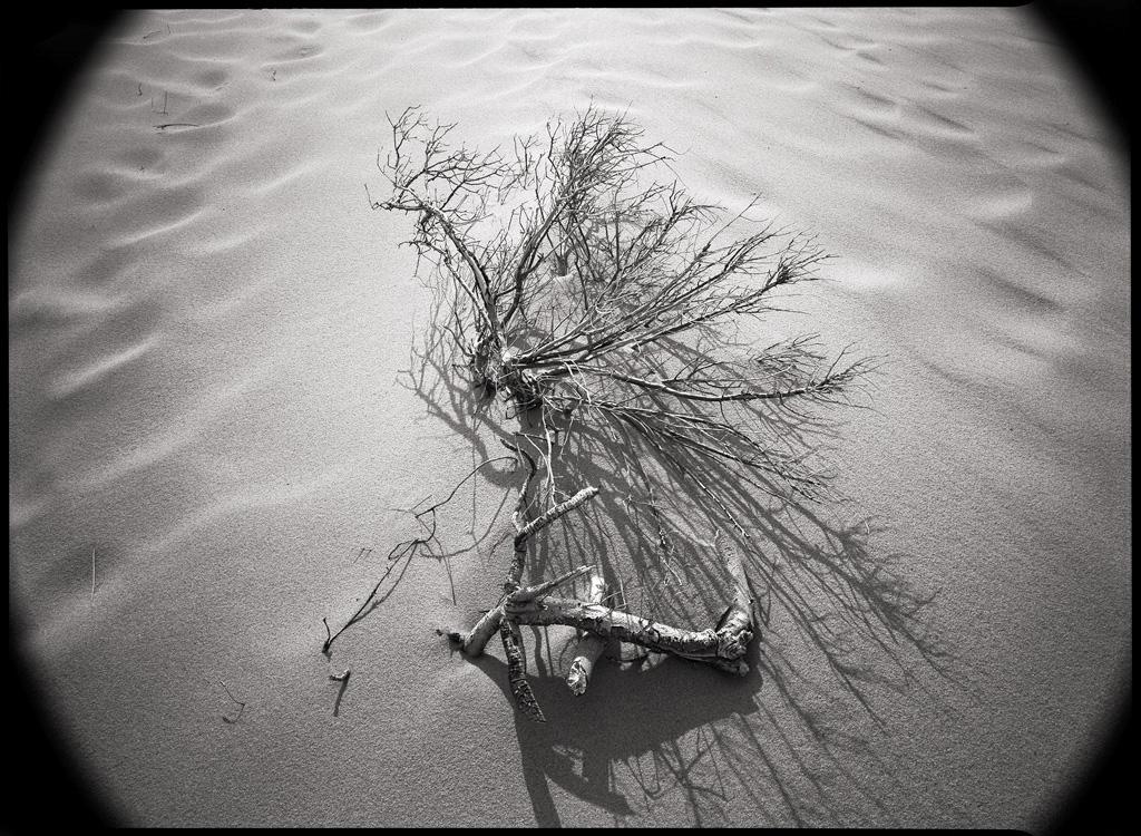 Dunes, Cape Cod, MA © David Ulrich